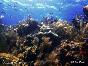 Key_Largo_Day3__Reef_3_72dpi.jpg