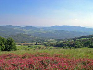 Italy2005_Colleoli_TuscanHills1_96dpi.jpg