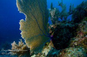 CaymanAggressor_Day3_3235.jpg